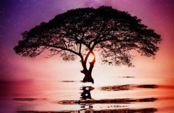 Water Tree Wallpaper 1080x2160 340x220