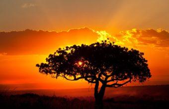 African Landscape Wallpaper 02 1024x683 340x220