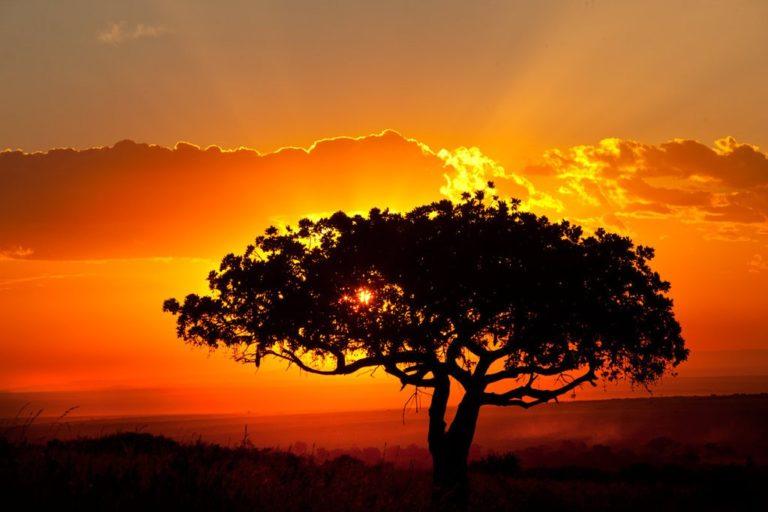African Landscape Wallpaper 02 1024x683 768x512