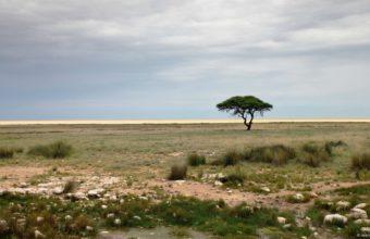 African Landscape Wallpaper 12 1920x1080 340x220