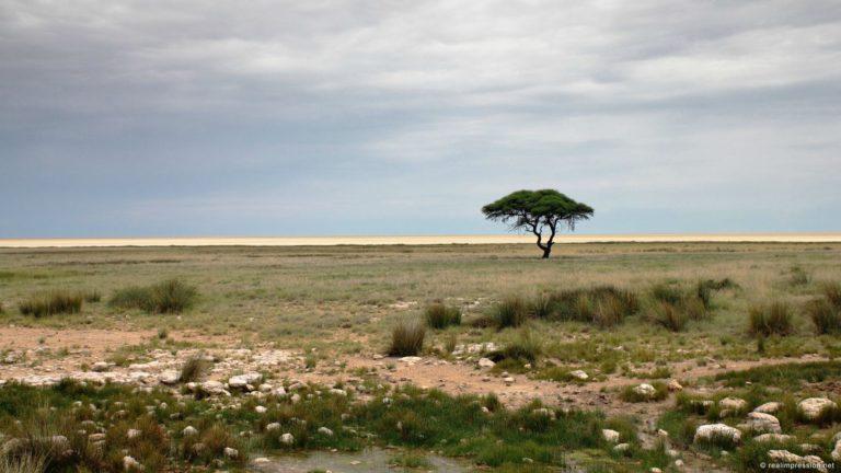 African Landscape Wallpaper 12 1920x1080 768x432