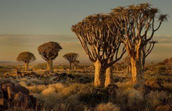 African Landscape Wallpaper 15 2048x1365 340x220