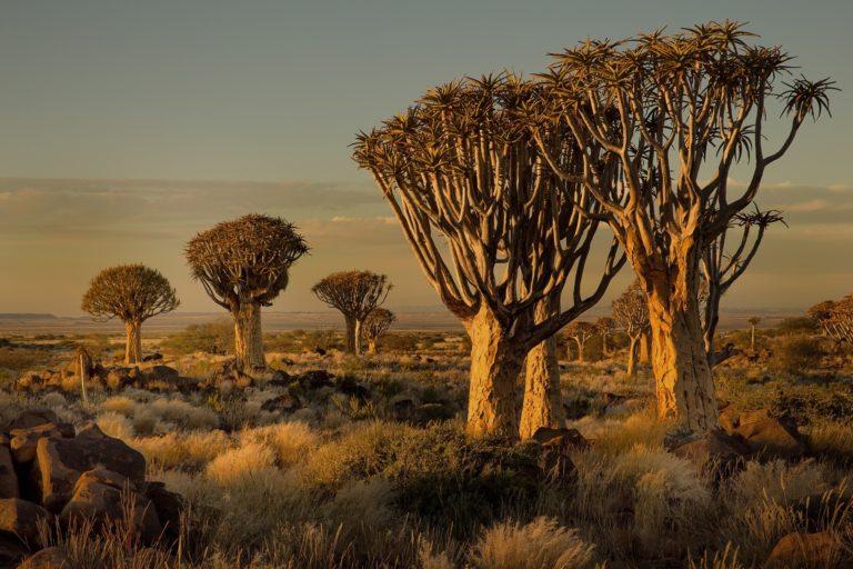 African Landscape Wallpaper 15 2048x1365 768x512