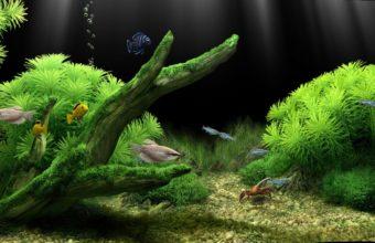 Aquarium Wallpaper 01 1280x800 340x220