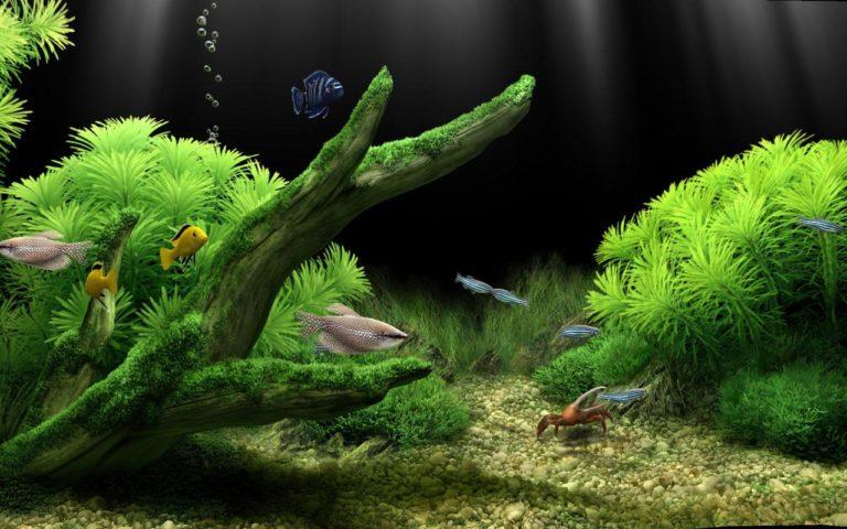Aquarium Wallpaper 01 1280x800 768x480