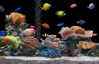 Aquarium Wallpaper 02 1920x1200 340x220