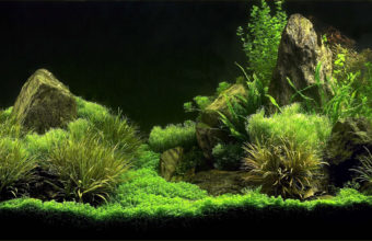 Aquarium Wallpaper 03 2560x1600 340x220