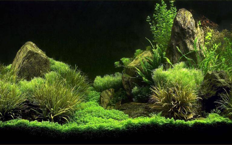 Aquarium Wallpaper 03 2560x1600 768x480