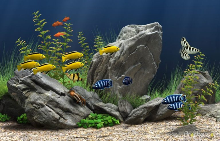 Aquarium Wallpaper 04 1024x656 768x492