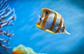 Aquarium Wallpaper 06 1920x1200 340x220
