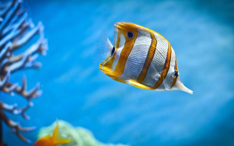 Aquarium Wallpaper 06 1920x1200 768x480