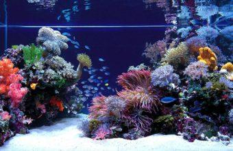 Aquarium Wallpaper 07 1920x1080 340x220