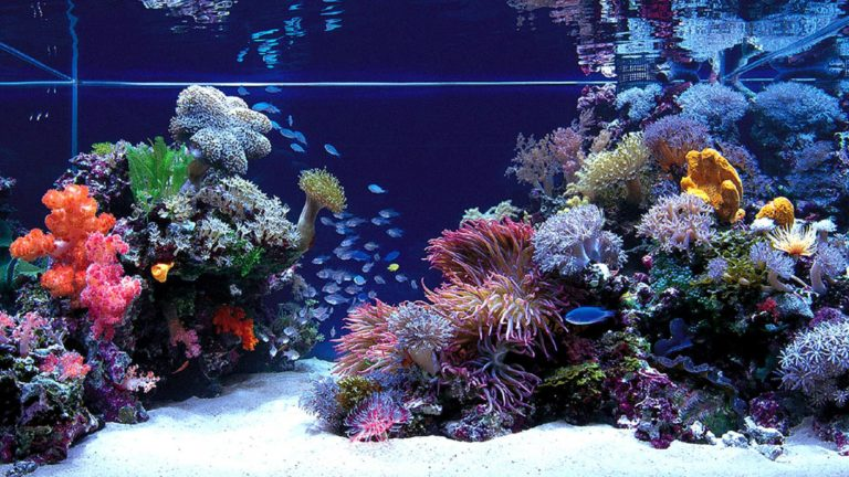 Aquarium Wallpaper 07 1920x1080 768x432