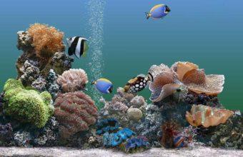 Aquarium Wallpaper 08 1024x768 340x220