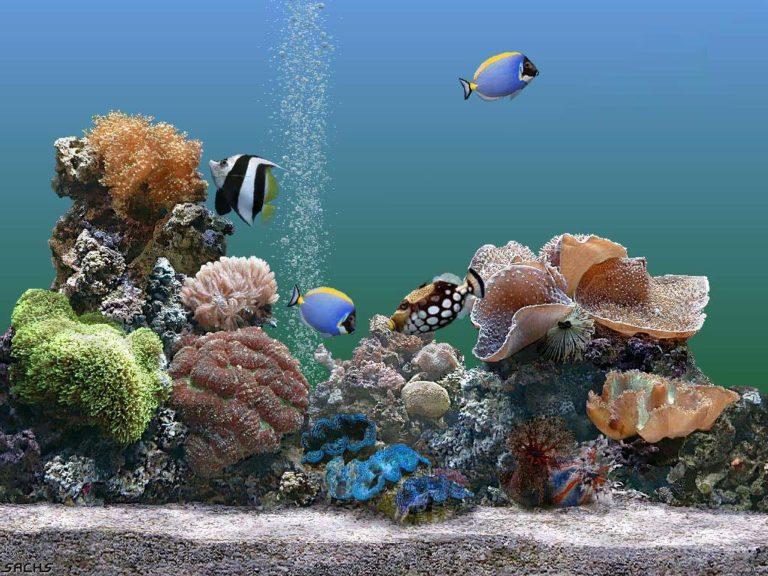 Aquarium Wallpaper 08 1024x768 768x576