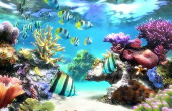 Aquarium Wallpaper 09 1280x720 340x220