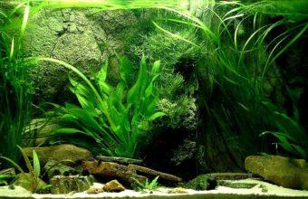 Aquarium Wallpaper 10 1280x800 340x220