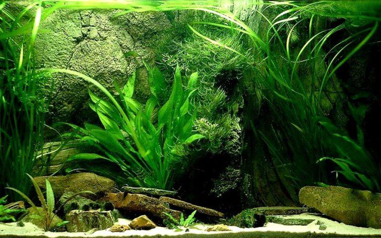 Aquarium Wallpaper 10 1280x800 768x480