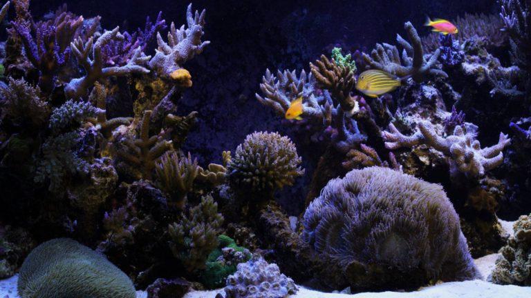 Aquarium Wallpaper 11 1920x1080 768x432