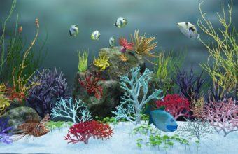 Aquarium Wallpaper 17 1366x768 340x220