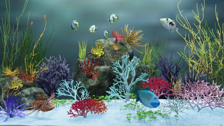 Aquarium Wallpaper 17 1366x768 768x432