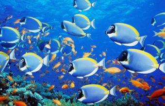 Aquarium Wallpaper 18 1280x800 340x220