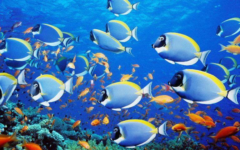 Aquarium Wallpaper 18 1280x800 768x480