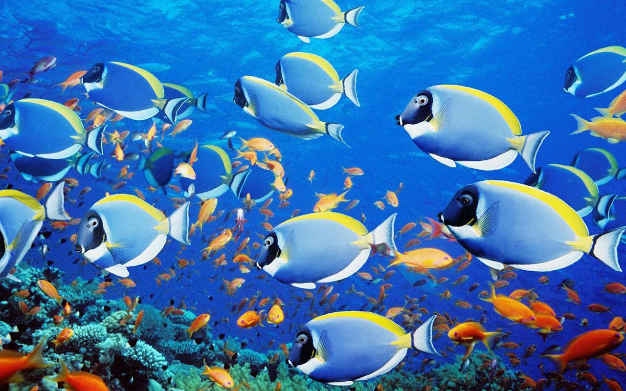 Aquarium Wallpaper 18