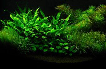 Aquarium Wallpaper 19 1920x1080 340x220
