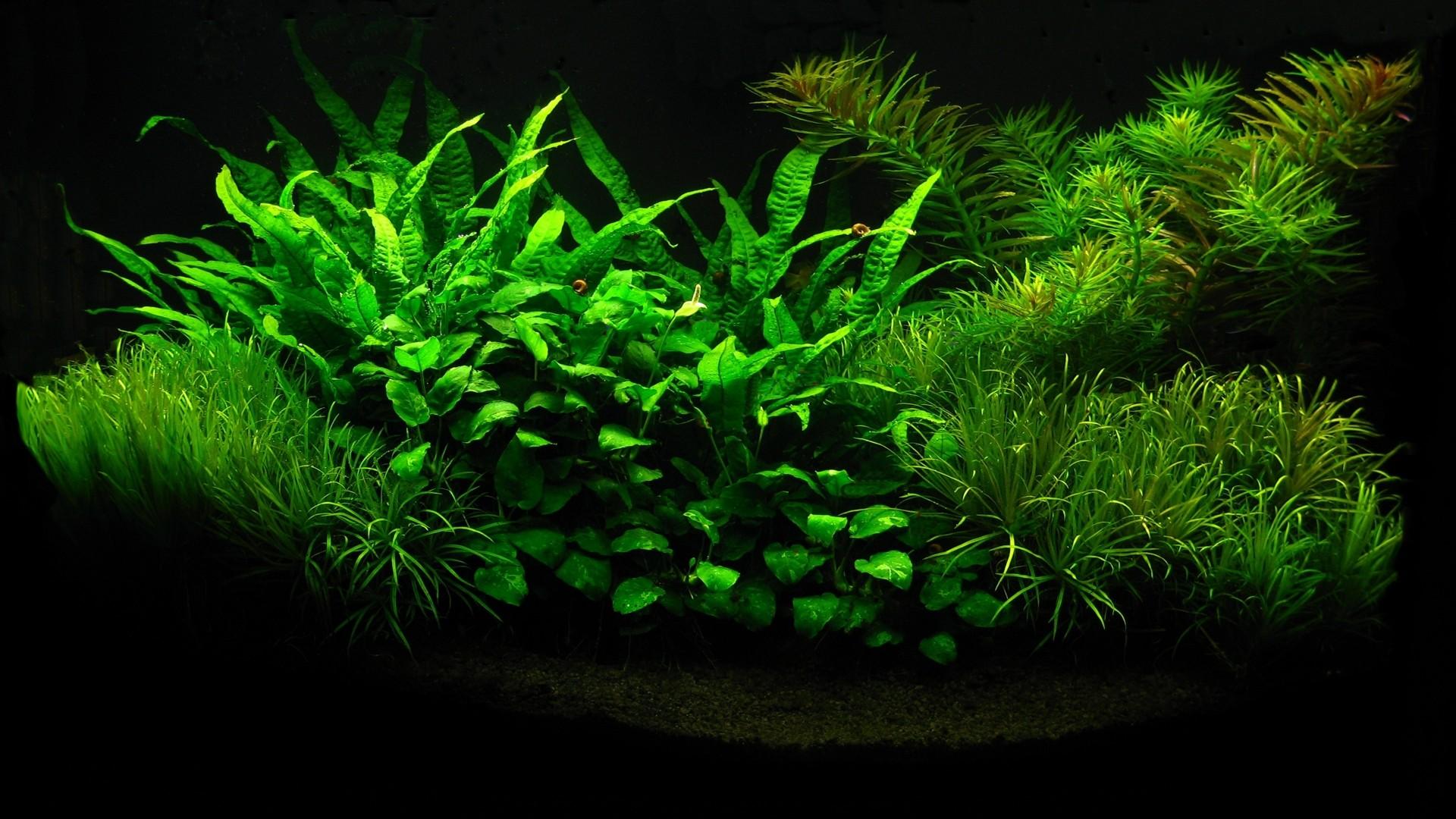 Aquarium wallpaper 19 1920x1080 voltagebd Images