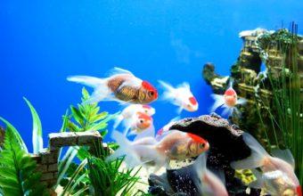 Aquarium Wallpaper 20 1920x1080 340x220