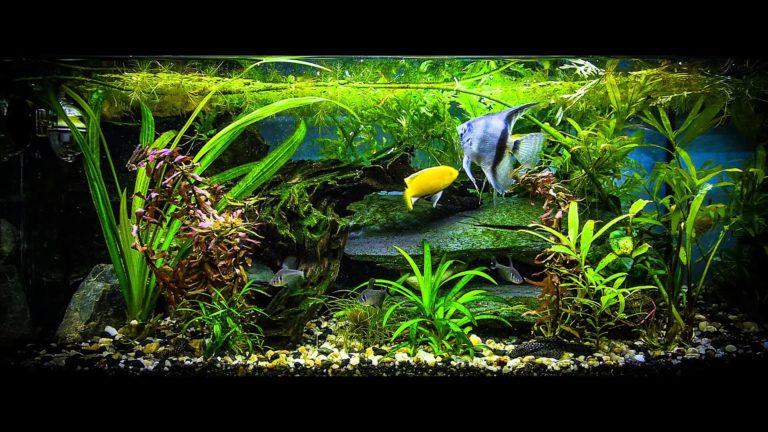 Aquarium Wallpaper 22 1920x1080 768x432