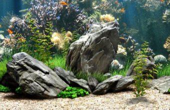 Aquarium Wallpaper 24 1280x713 340x220