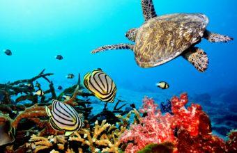 Aquarium Wallpaper 25 1600x1200 340x220