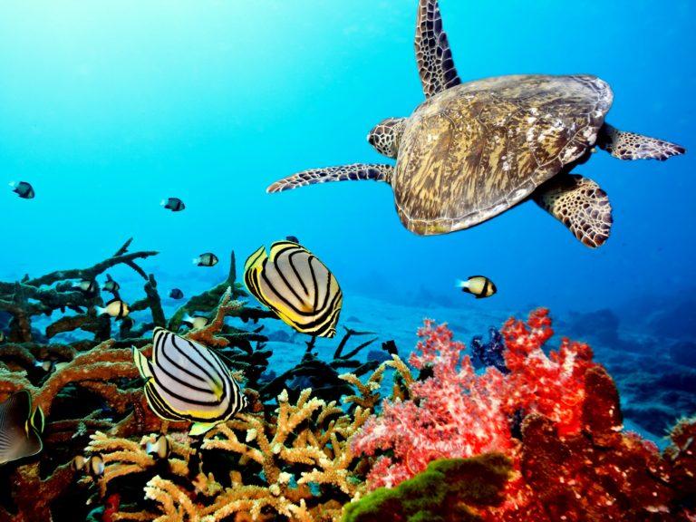 Aquarium Wallpaper 25 1600x1200 768x576