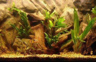 Aquarium Wallpaper 26 2301x1041 340x220