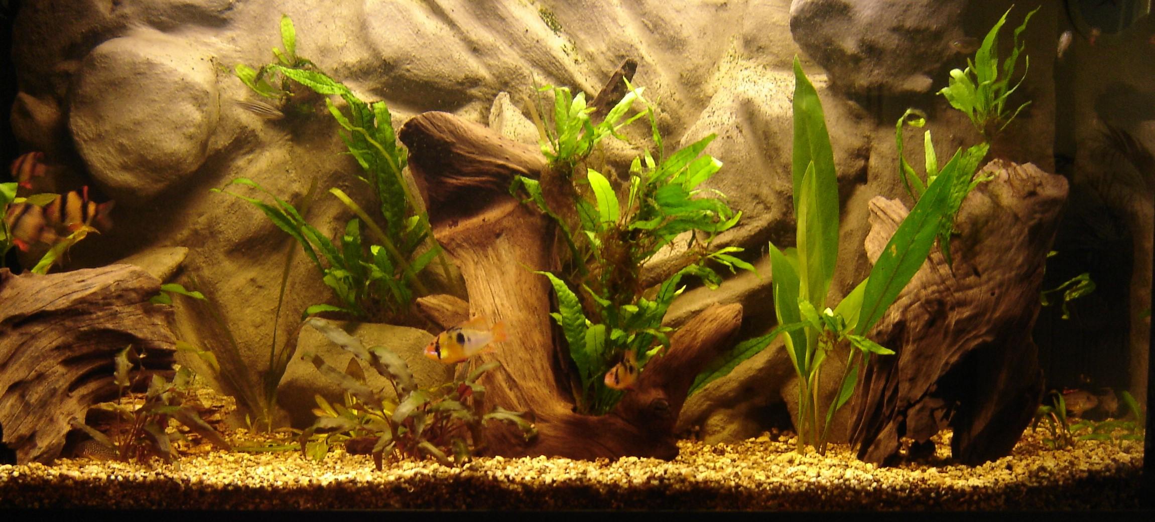 Aquarium wallpaper 26 2301x1041 for 1041 the fish