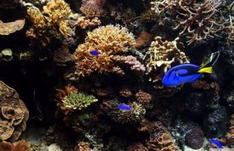 Aquarium Wallpaper 28 1366x768 340x220