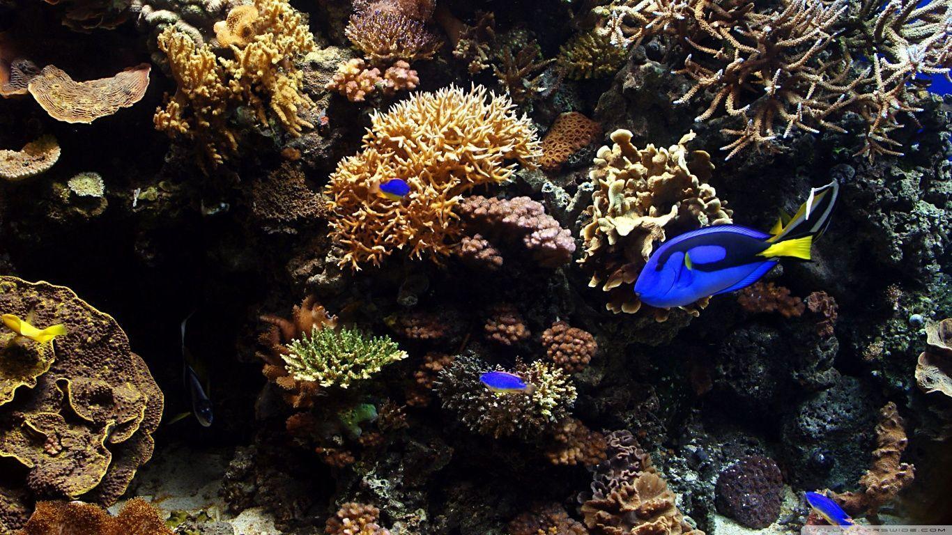 Aquarium Wallpaper 28