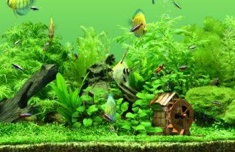 Aquarium Wallpaper 29 2560x1024 340x220