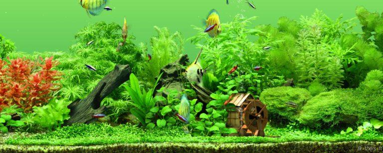 Aquarium Wallpaper 29 2560x1024 768x307