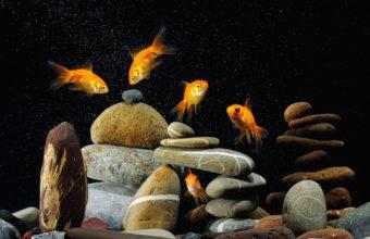 Aquarium Wallpaper 30 3840x2400 340x220