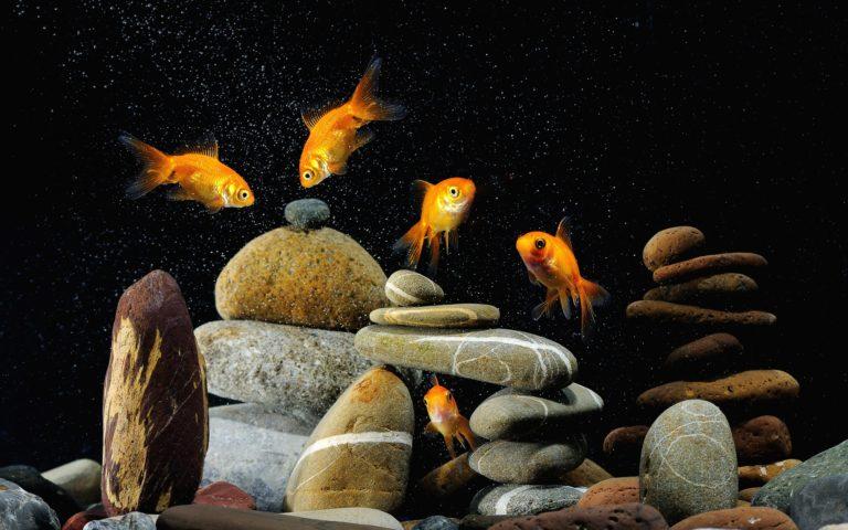 Aquarium Wallpaper 30 3840x2400 768x480