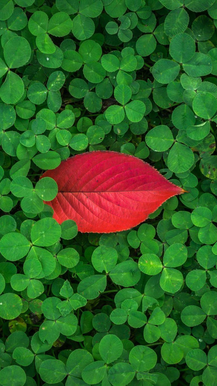 Clover Leaves Plant Green Wallpaper 1440x2560 768x1365