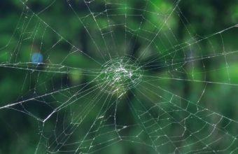 Cobweb Grid Netting Wallpaper 1440x2560 340x220