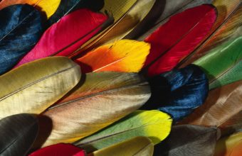 Feathers Wallpaper 04 1920x1200 340x220