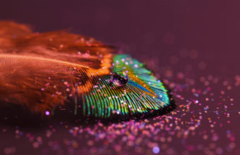 Feathers Wallpaper 06 2880x1800 340x220