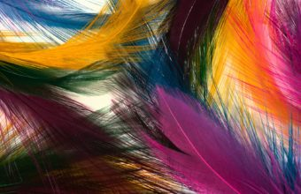 Feathers Wallpaper 07 1920x1200 340x220