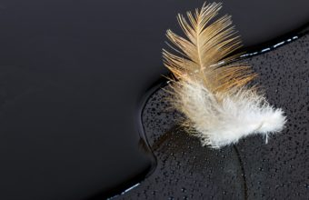 Feathers Wallpaper 15 3840x2160 340x220