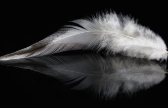 Feathers Wallpaper 19 5432x2923 340x220
